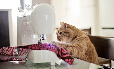 Cat sewing fabric on a sewing machine